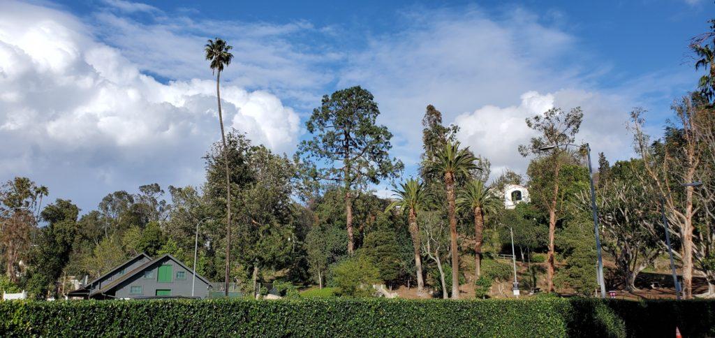 Post Rain in Los Angeles